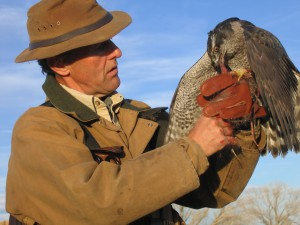 Raptor Force: Steve Hein with a gyrfalcon